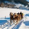 winter-pferdekutsche-1